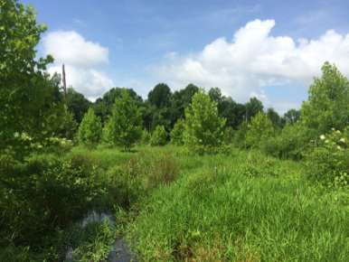 Forested Wetland Restoration Area